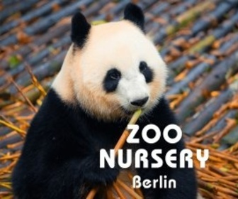 Replay Zoo nursery : Berlin - S7 : Épisode du mercredi 28 août 2019