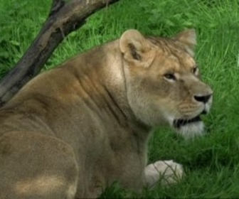 Replay Zoo Nursery France - S1 E10 : Entre les gouttes au Cerza