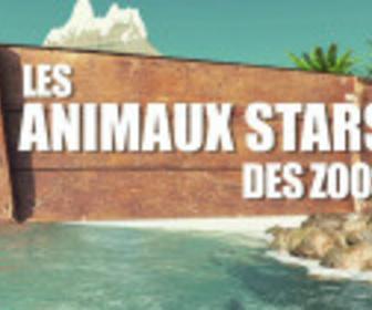 Animaux stars du zoo replay