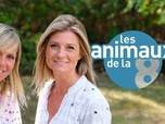 Replay Les animaux de la 8 - Émission du 29 nov. 2020