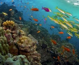 Les mystères de la Barrière de corail replay